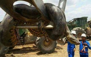 Loài vật to lớn nhất hành tinh