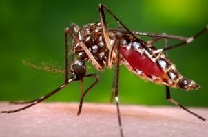 Biện pháp phòng, tránh muỗi truyền bệnh