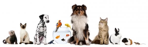 Trang web bổ ích về thú cưng