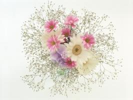 ý nghĩa của các loài cây và hoa ứng dụng trong phong thủy