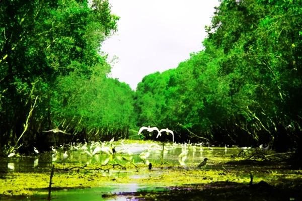 Tra Su Melaleuca forest ecosystem