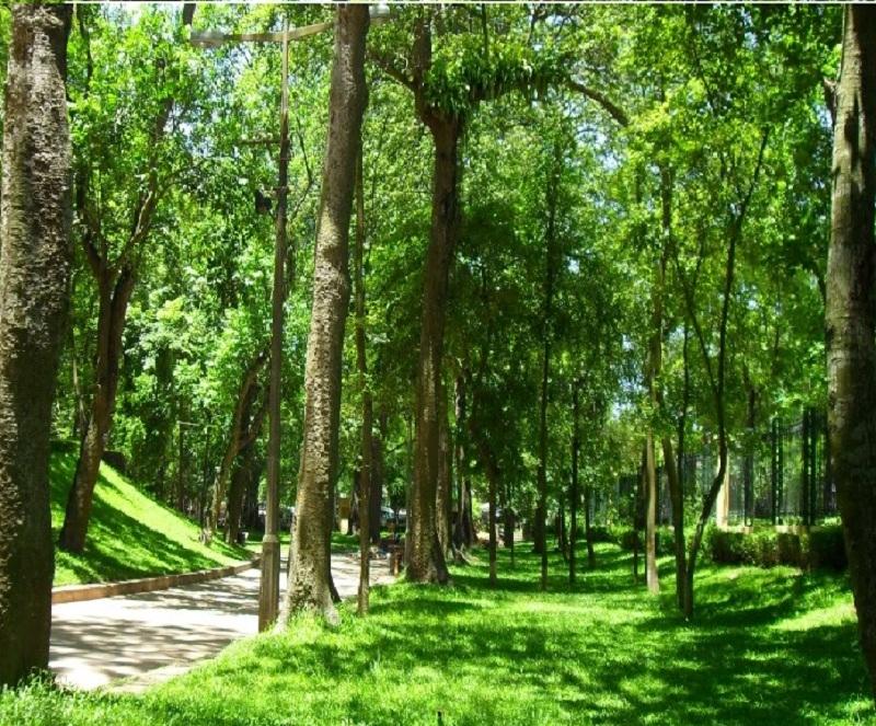 Vườn bách thảo Botanic Garden Singapore