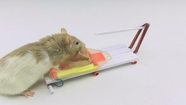 Top 10 dịch vụ diệt chuột tại nhà uy tín nhất tại Hà Nội