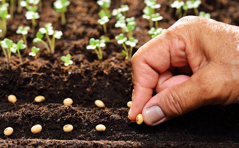 Top 6 nguyên tắc trồng rau an toàn