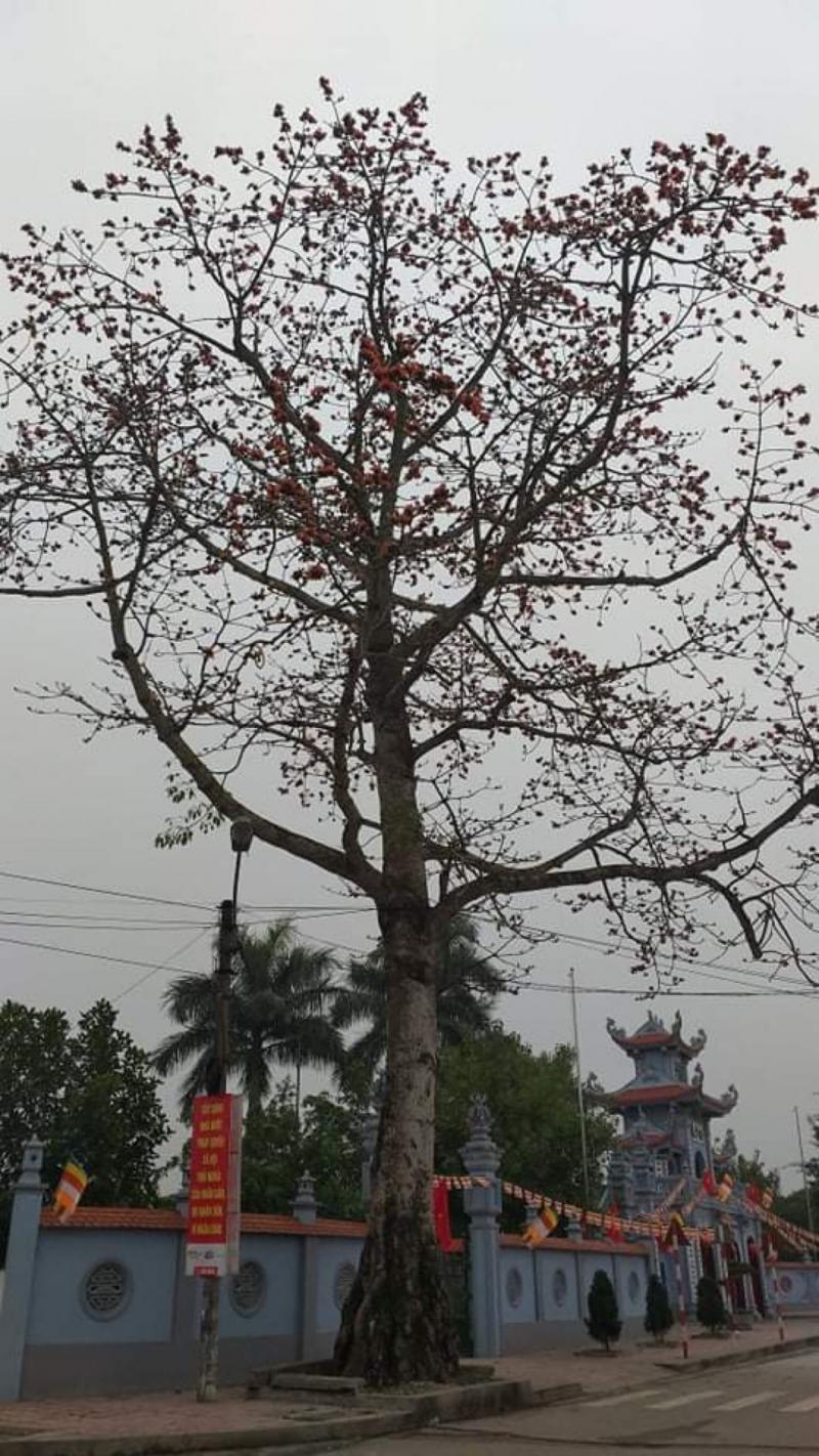Ảnh: Nguyễn Toàn