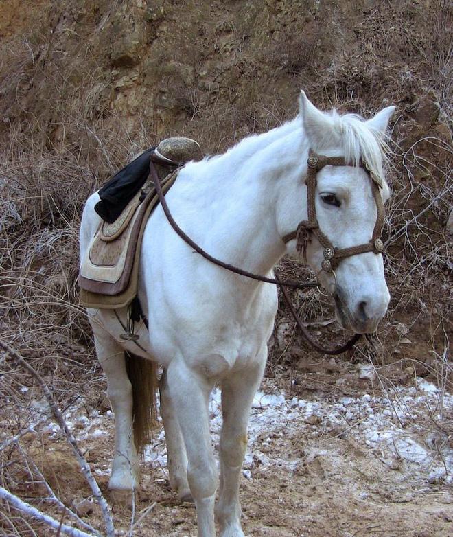 Chú ngựa đen sau khi đã được tô màu lông