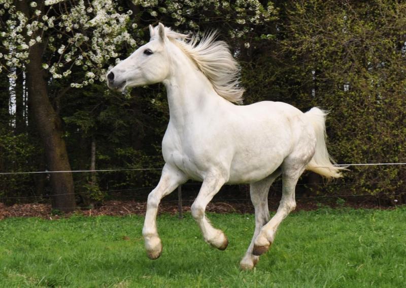 Chú ngựa này khỏe lắm! Phi như nước đại nhanh như bay.