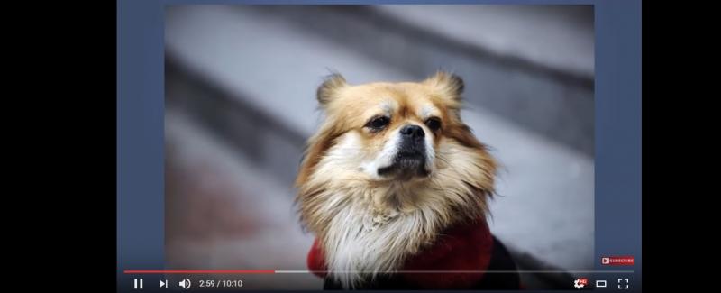 Hình ảnh một chú chó trong Clip
