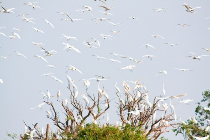 Đảo Cò Chi Lăng Nam