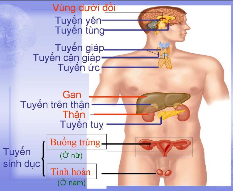 21-23 giờ: Thời gian giải độc của hệ bạch huyết và hệ thống nội tiết