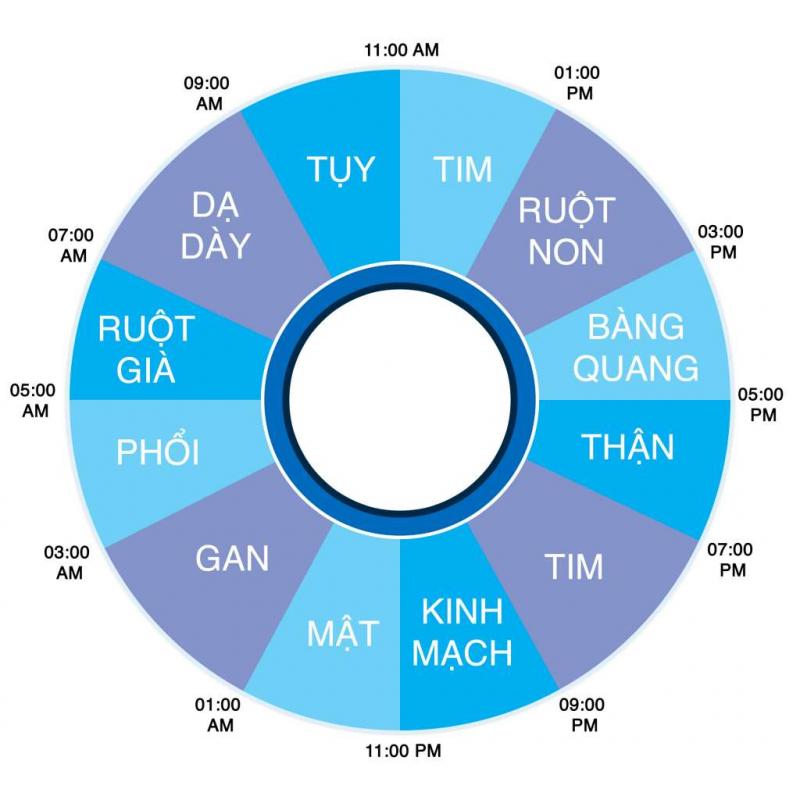 23 - 5 giờ sáng hôm sau: Thời gian giải độc cho mật, gan và phổi
