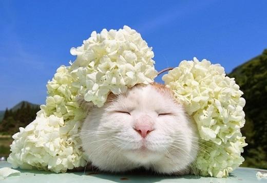 Hoa và mèo, em chọn ai?