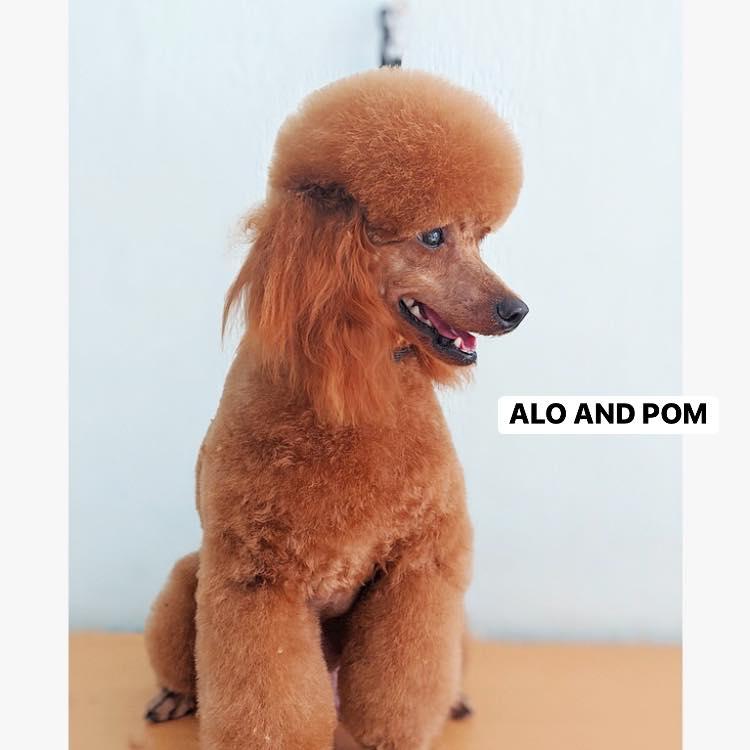 Alo and Pom