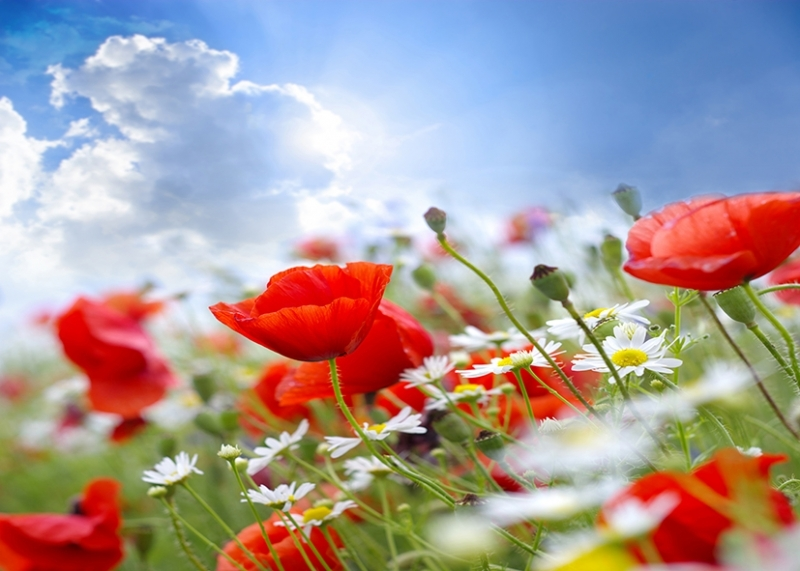 Tranh hoa lá
