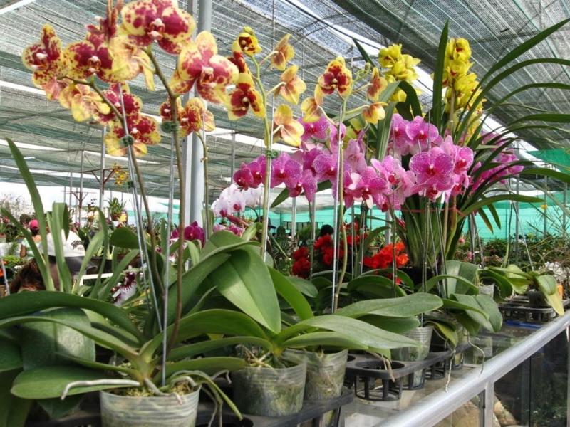 Ánh sáng là yếu tố quan trọng trong quá trình phát triển của hoa