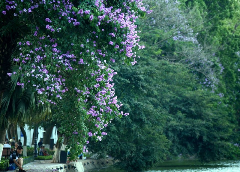 Ở trên con phố Tràng Thi vào mùa hè, mùa thu, ngoài nhìn ngắm Annie's Little Hanoi, bạn còn được sống trong một khung cảnh lãng mạn và nên thơ rất riêng của Hà Nội