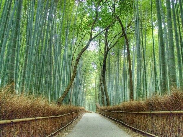 Arashiyama (Nhật Bản)