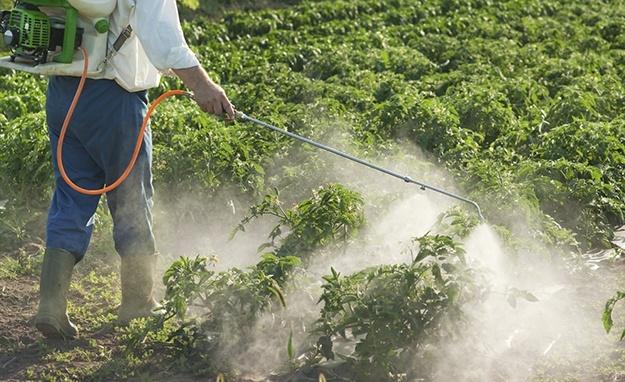 Thuốc diệt cỏ atrazine gây ô nhiễm nguồn nước