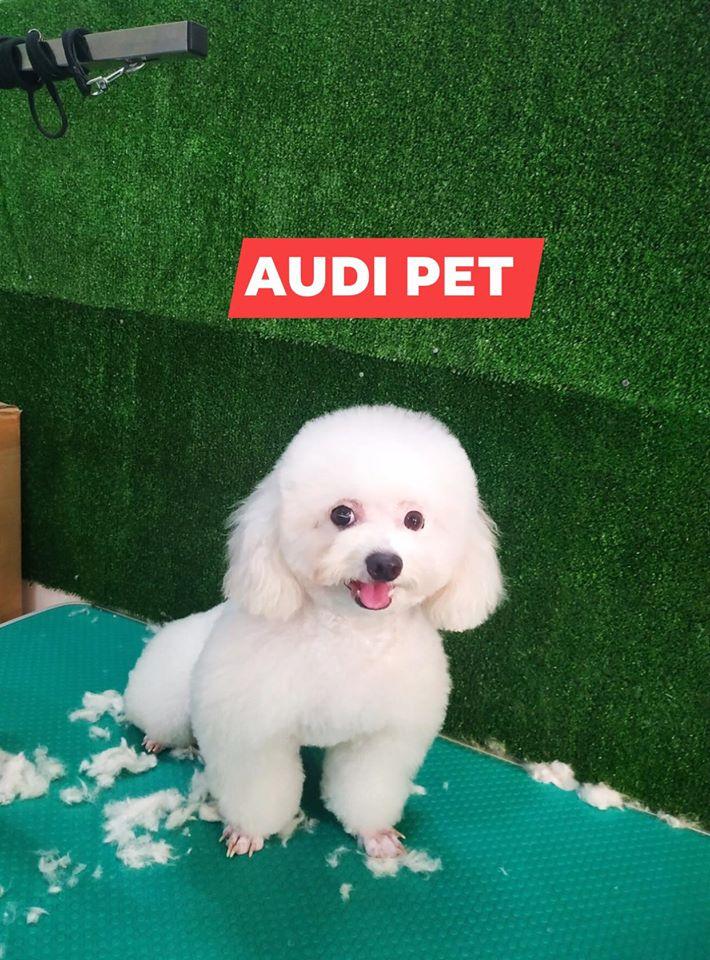 Audi Pet
