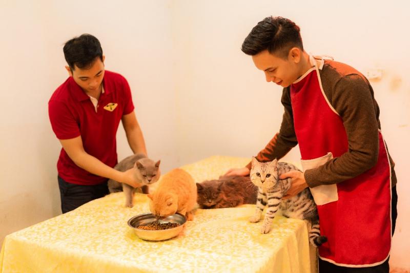 Azpet Shop sử dụng hạt ANF, Royal Cannin cao cấp + Thịt bò, lợn, gà làm thức ăn cho các bé mèo.