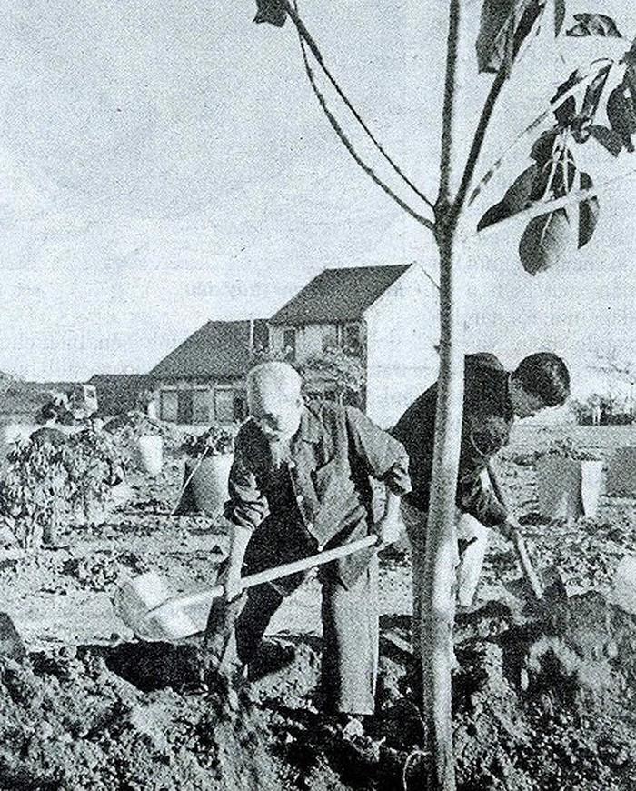 Hình ảnh Bác trồng cây