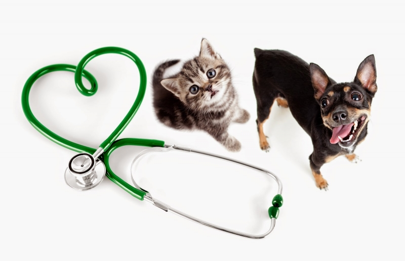 Bác sĩ thú y là nghề có tỷ lệ tự sát thứ 4
