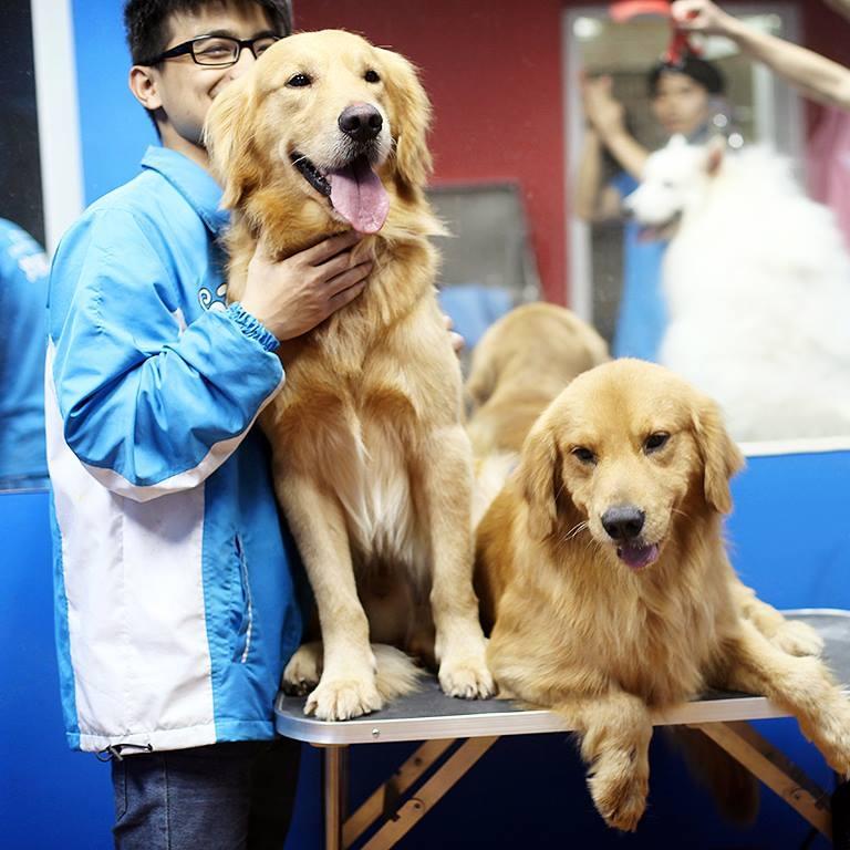 Bác sĩ thú y, nhân viên chăm sóc thú cưng