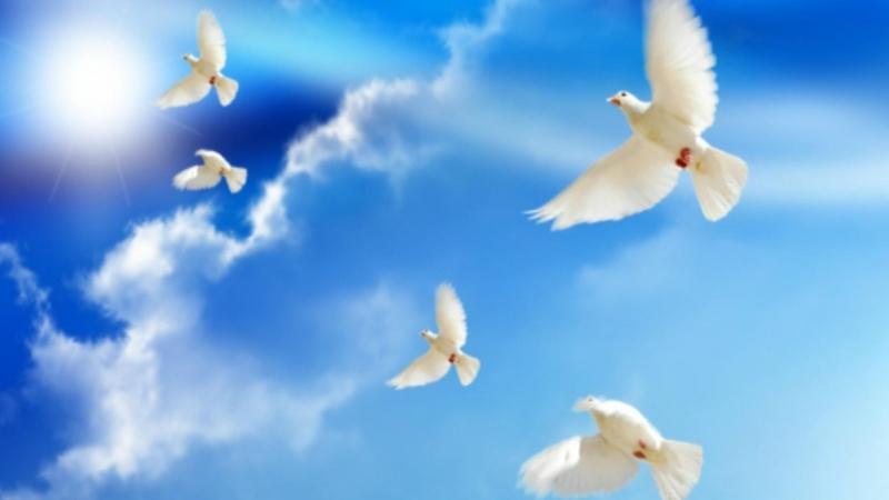Trở lại hòa bình