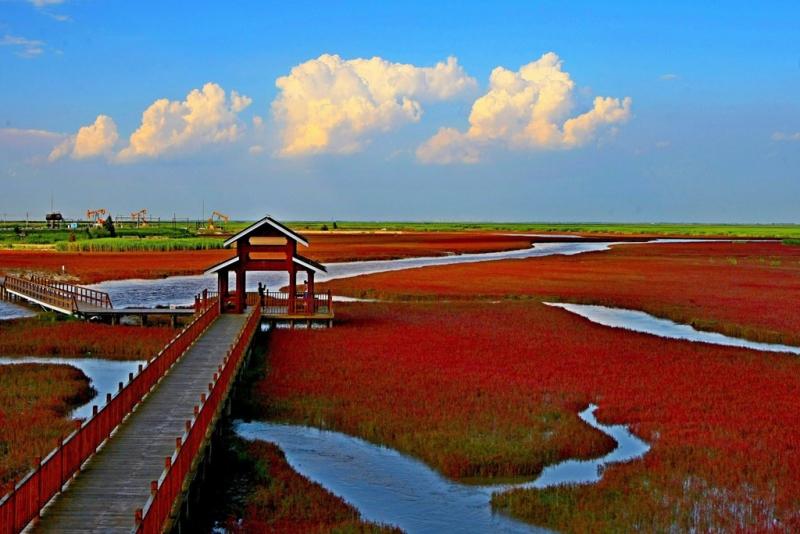 Bãi biển đỏ - Trung Quốc