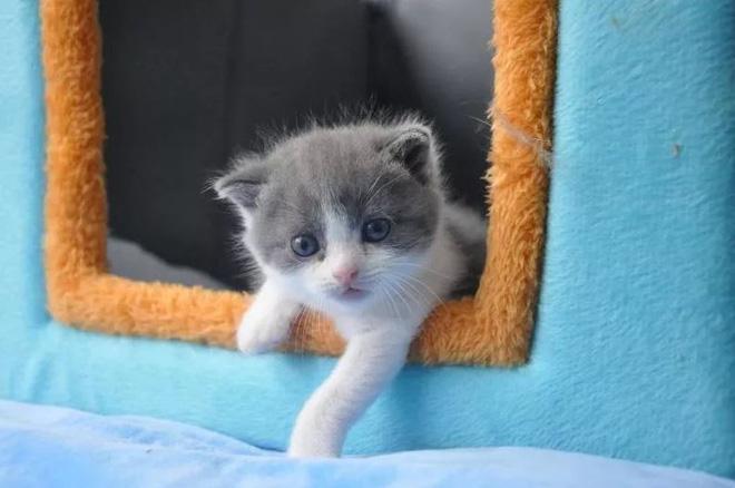 Đoạn văn miêu tả con mèo hay nhất dành cho học sinh lớp 2