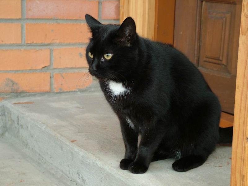 Chú mèo Joba sẽ mãi là người bạn thân của riêng em và của gia đình em!