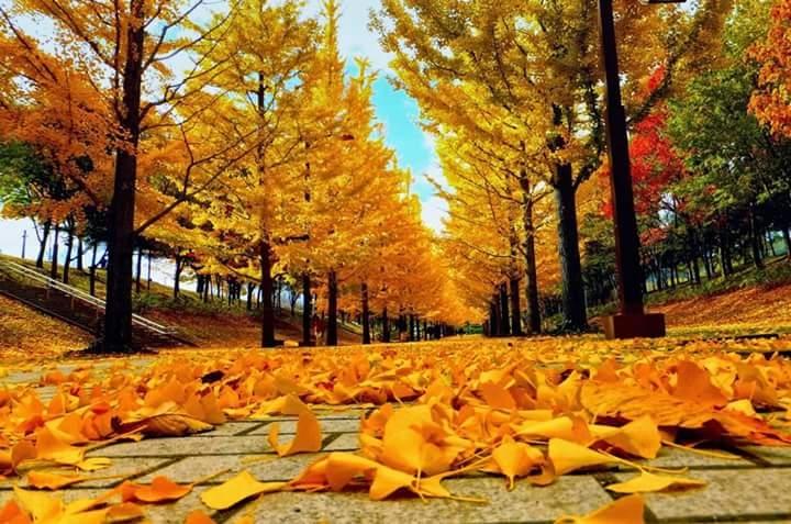 Top 10 Bài thơ hay viết cho mùa lá rụng