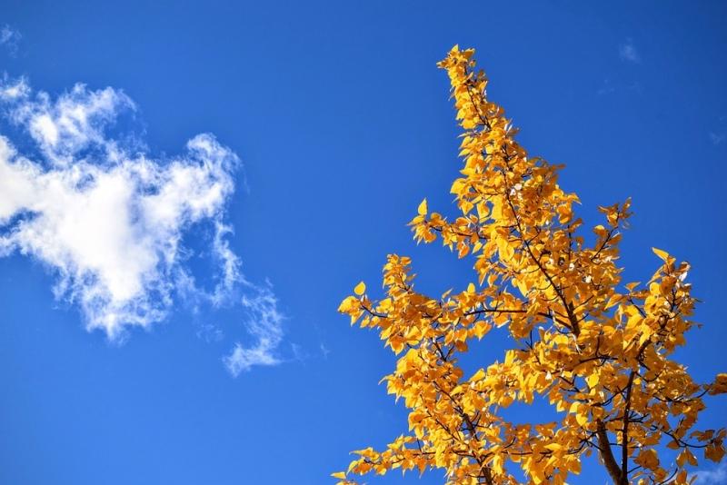 Bầu trời trong veo, xanh thắm.