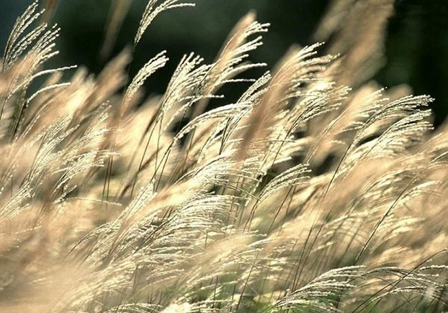 Gió heo may là đặc trưng của mùa thu.
