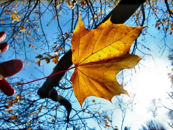 Lá vàng rơi, xoay xoay trong gió.