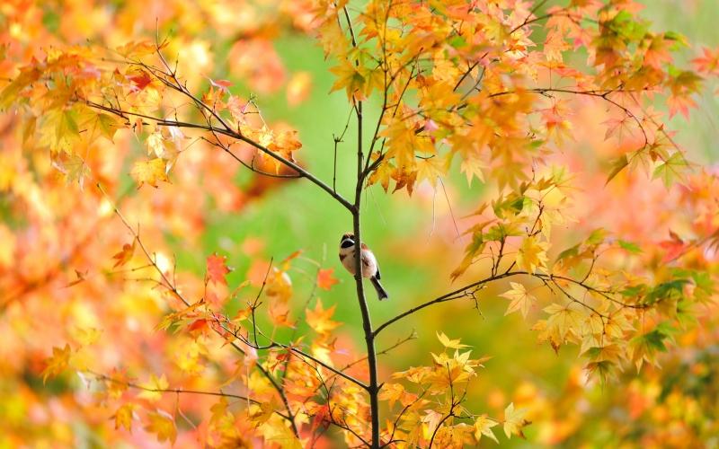 Chim hót mùa thu