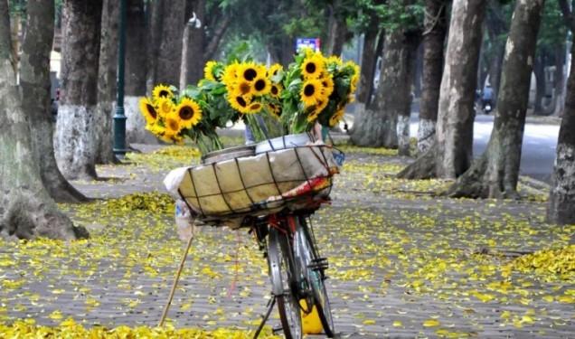 Yêu biết mấy những gánh hàng hoa vào mùa thu.