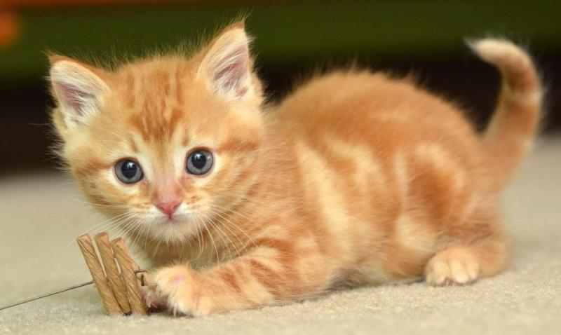Bài văn tả con mèo số 2