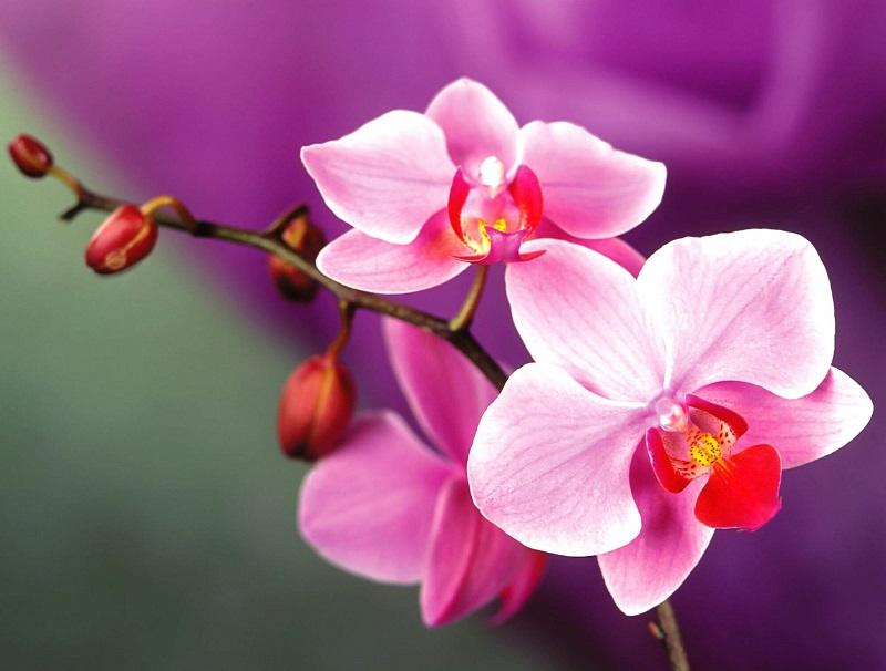 Top 7 bài văn tả hoa lan hay nhất - Toplist.vn