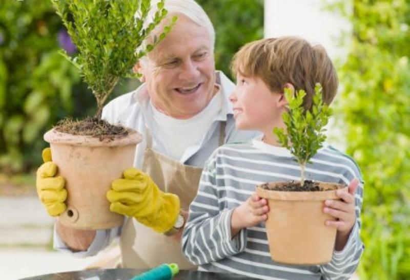 Trong nhà tôi, ông thường coi vườn cây xanh trên tầng thượng là tài sản của mình.