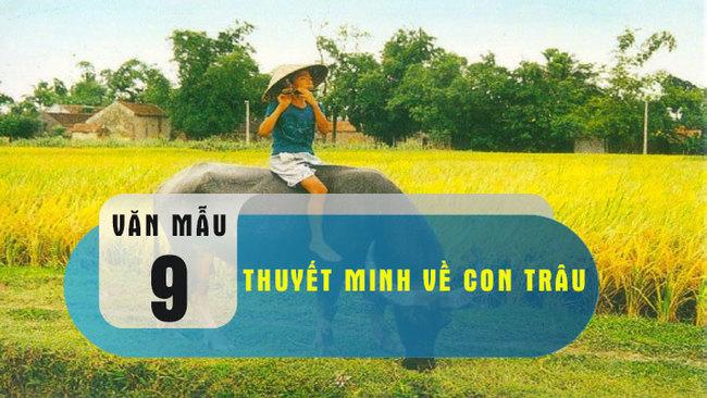 Top 12 Bài văn thuyết minh về con trâu ở làng quê Việt Nam lớp 9 hay nhất