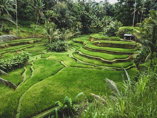Bali - Indonesia là địa điểm du lịch tuần trăng mật lý tưởng cho bạn