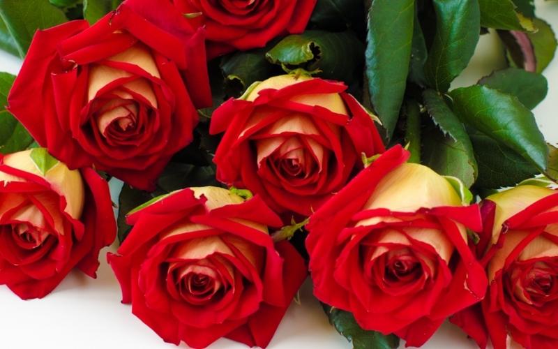 Hoa hồng luôn là mặt hàng chủ lực của valentine