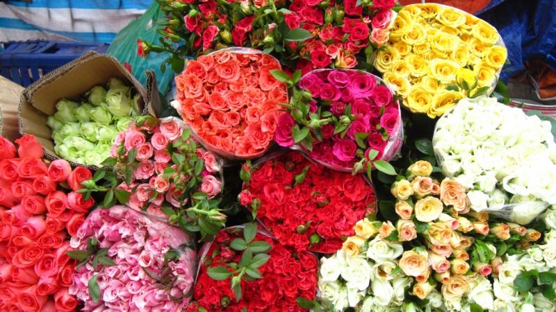 Bên cạnh hoa cúng thì các chậu hoa kiểng độc đáo