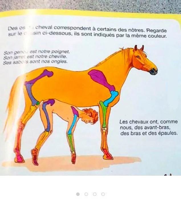 Bạn nghĩ đây là hình ảnh minh họa điều gì? Đừng nghĩ đen tối nhé, đó chỉ là hình so sánh xương người và xương ngựa thôi