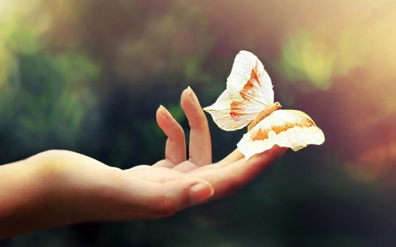 Bàn tay em trao cho anh