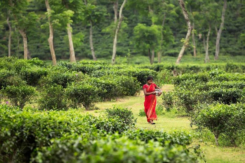 Chi phí nhân công ở Bangladesh chỉ là 228 USD/năm
