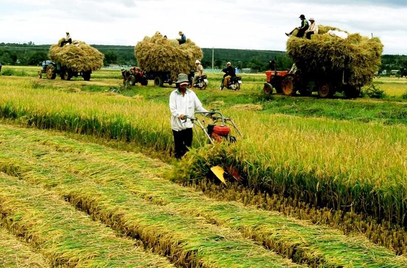 Báo nông nghiệp Việt Nam: http://nongnghiep.vn