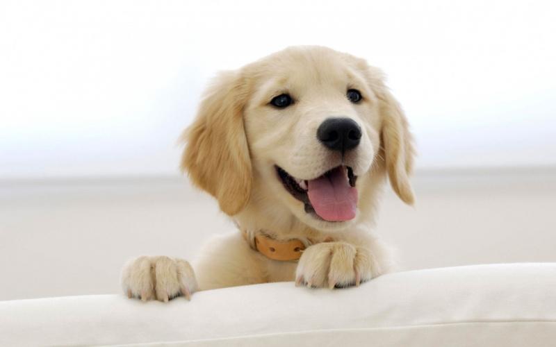 Bảo Sinh Cat Dog Resort