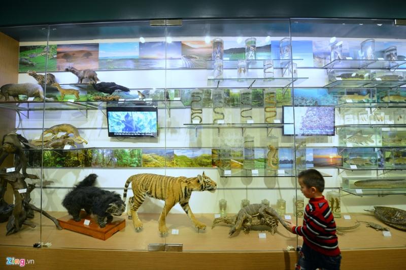 Các mô hình và tiêu bản động vật được trung bày trong bảo tàng rất khoa học và đẹp mắt